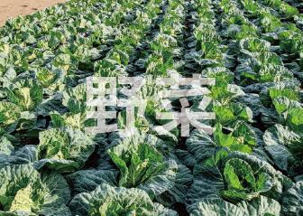 地産地消!三島箱根 地場野菜
